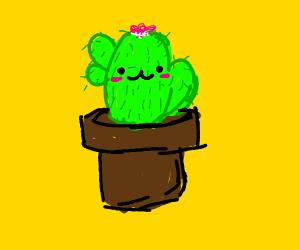 Kawaii little cactus