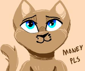 Cute cat asks for money