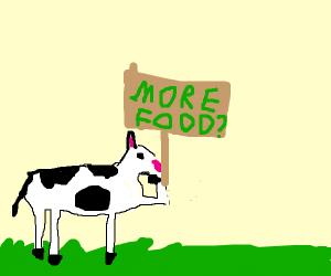 cow attempts communication w humans