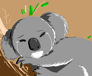 sad fat koala bear