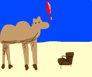 Camel finds a boot.
