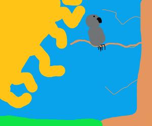 Grey bird on branch