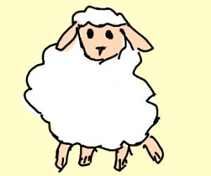 f l o o f y sheep