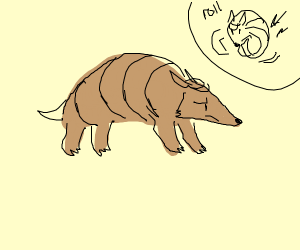An armadillo