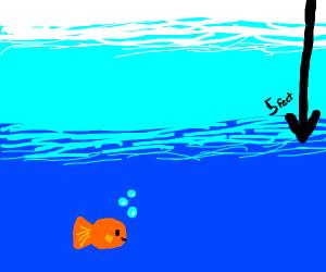 High five under water