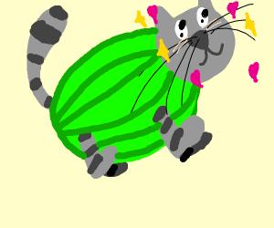 kawaii desu watermelon cat