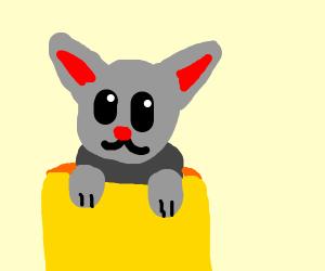gray kitten sticking out of a yellow mug