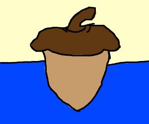 acorn in the water