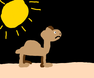 a caramel walking in the desert