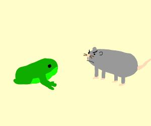 Rat glares at a frog
