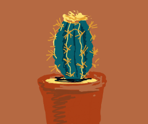 a potted cactus