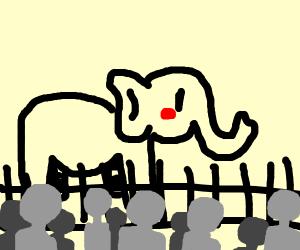 Elephant Exhibit
