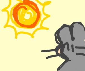 Sun shining on rat