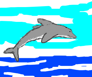 A dolphin jumping out of water