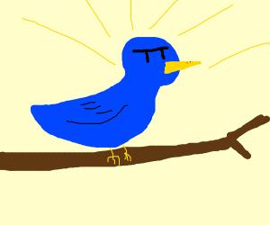 Supreme blue bird