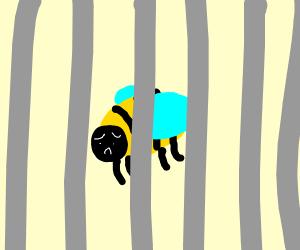 Bee Jail