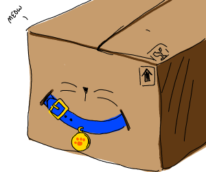 Box with a blue cat collar