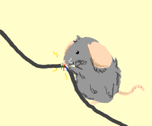 mouse munching on cord