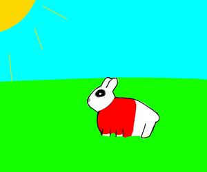 Rabbit wearing a shirt