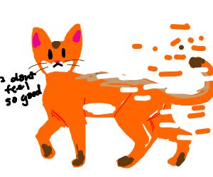 Abyssinian cat doesn't feel so good
