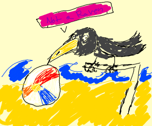 Crow on a Beach