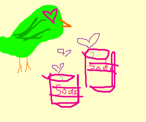 Parrot falling in love with multiple sodas