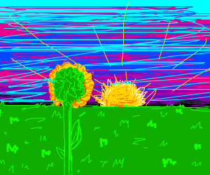 A Run Sun Flower in an open field.
