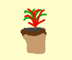 Red / Green Potted Plant