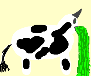 cow on acid