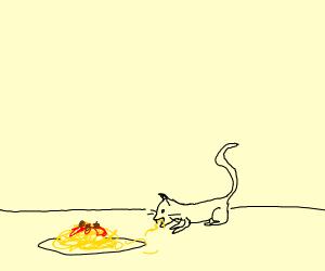 cat eating noodles