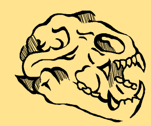 a bear skull