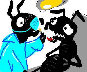 Ant Dentist Fixes Mandible