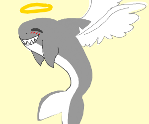 if a shark was an angel