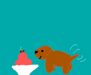 a small brown dog eating ice-cream