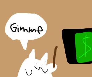 cat wants your money