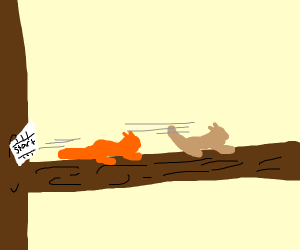 squirrels race  on a tree