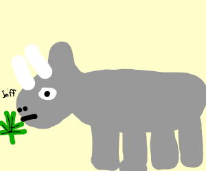 rhino sniffing weed