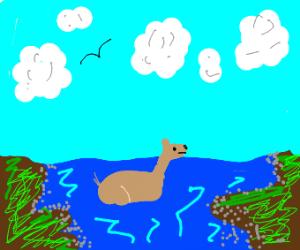 deer swimming in a river