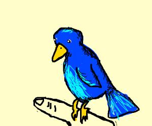 Cyan bird sitting on someone's fingers