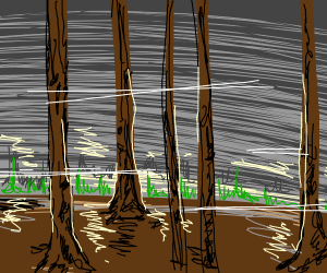 Its low evening in the forest