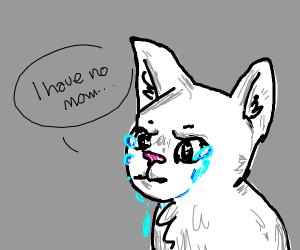 Sad kitty has no mom