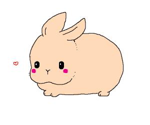 Fluffy cute animal