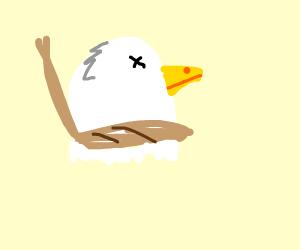suicide bird