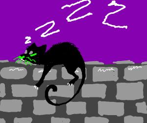 A black cat sleeping
