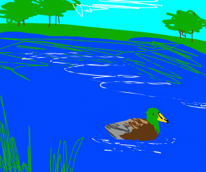 duck in pond