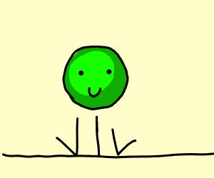 pea bouncer