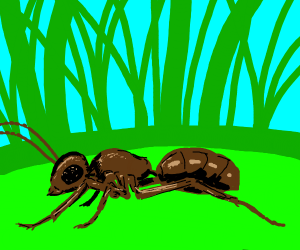 Ant in the grass