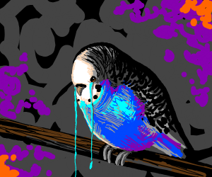 crying parakeet