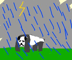 Sad panda in a storm