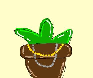 Shiny plant